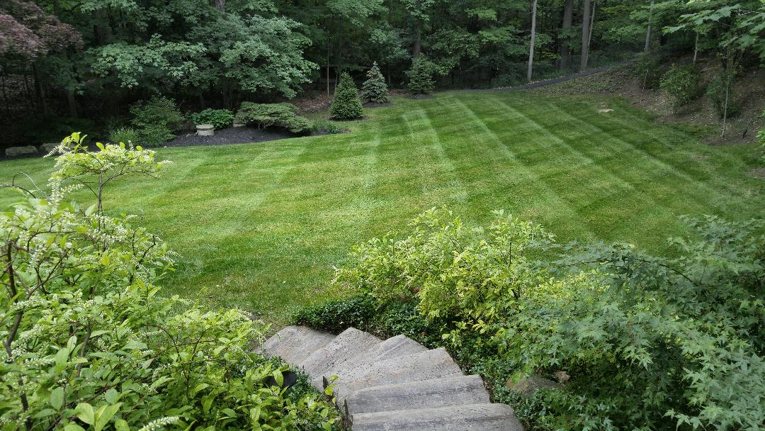 Residential lawn in The Chagrin Valley with proper fertilization.